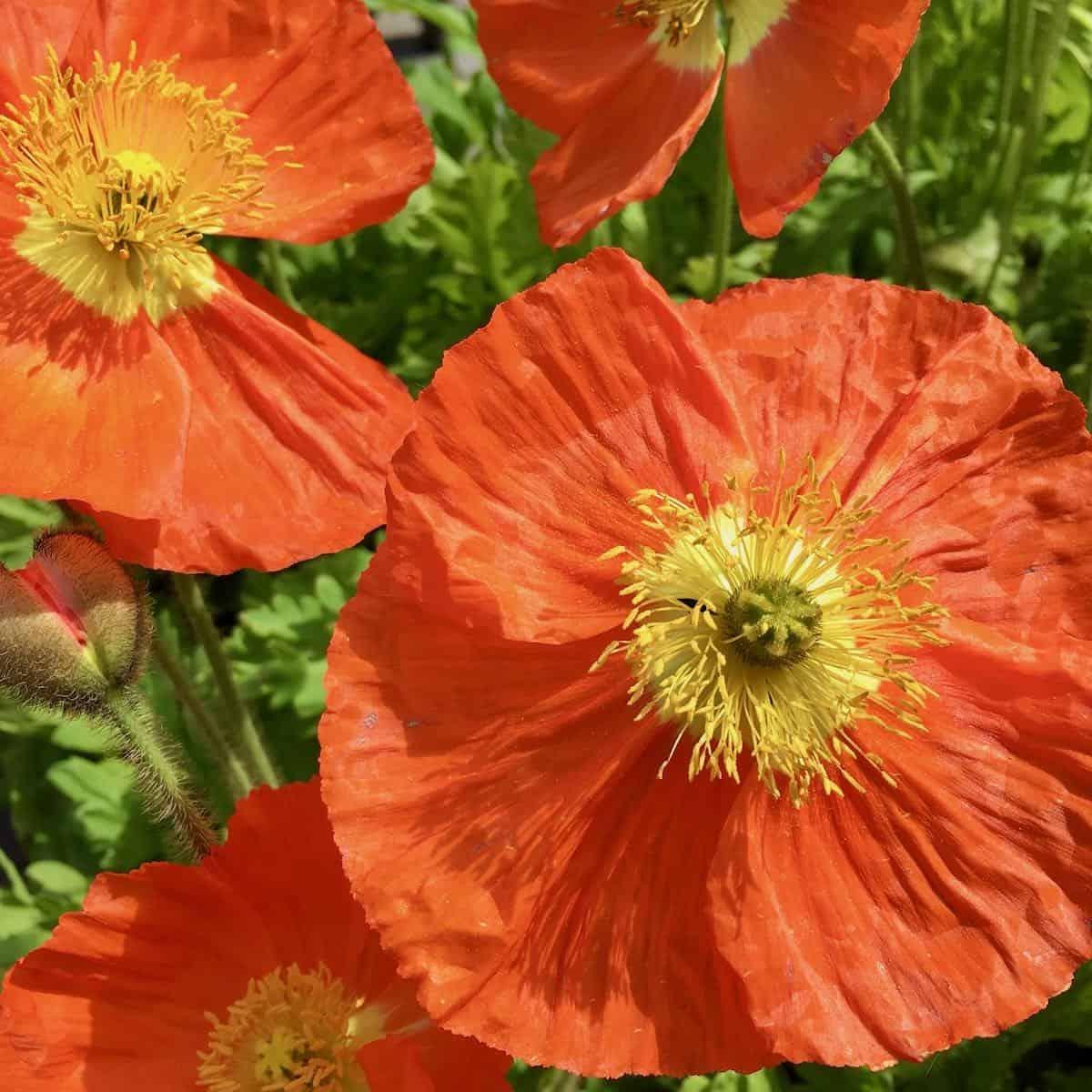 Good For the Soul orange flowers